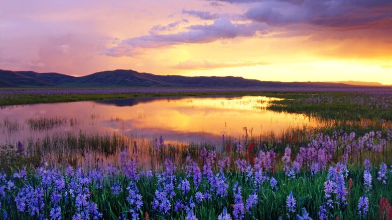 camas-prairie-at-sunset-225383